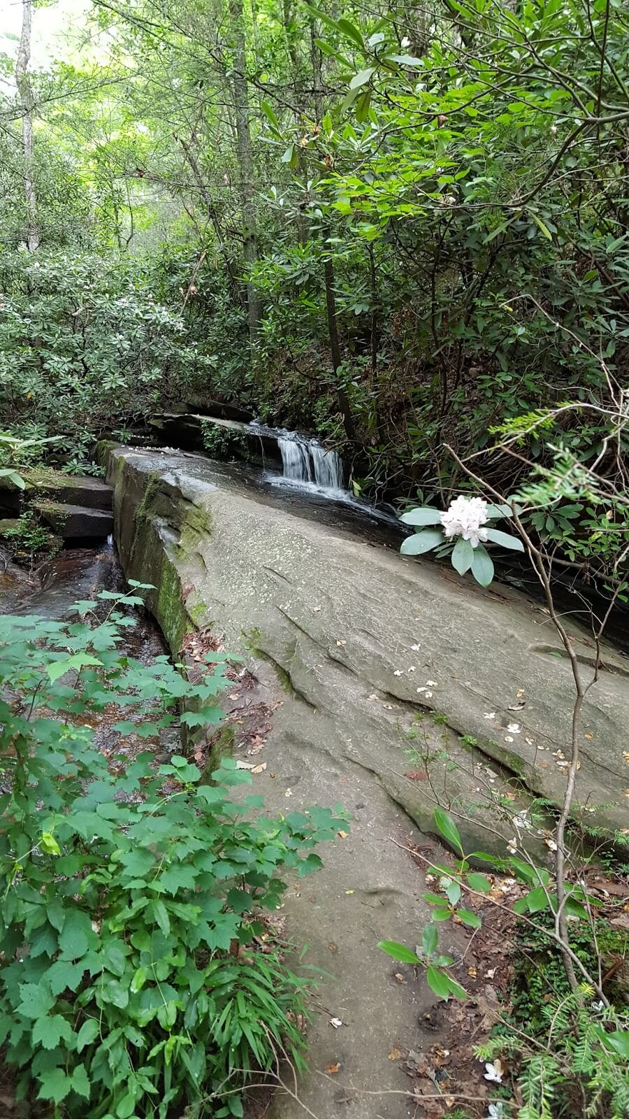 Interesting waterfall trail in Table Rock - Carrick Creek - SC travel - fun outdoors