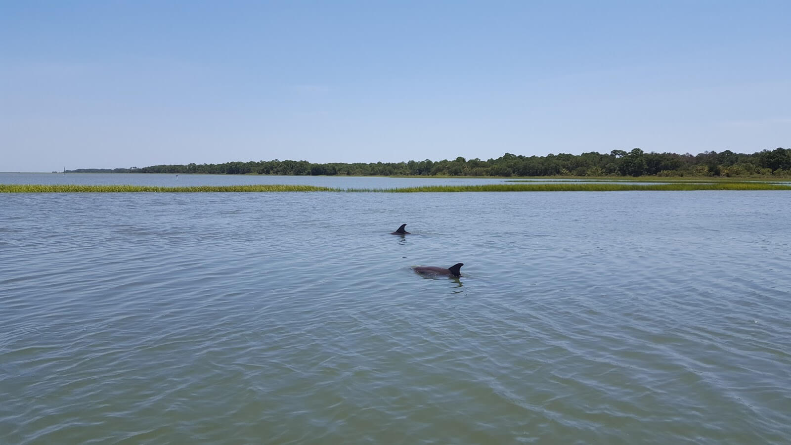 Dolphin Tours in Charleston SC